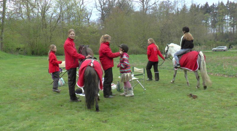 Heste er blandt oplevelserne på fritidsmessen Livet på Landet. Foto: Jesper von Staffeldt.
